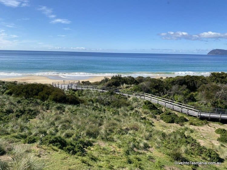Bruny Island Penguins: Everything You Need To Know To Visit!