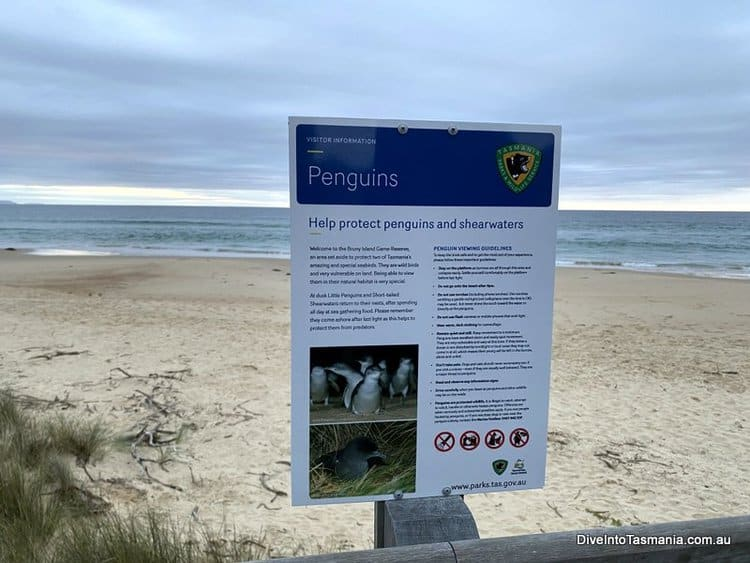 Bruny Island penguins Notice board at the observation point
