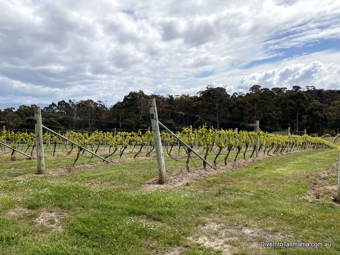 Bruny Island wine tour