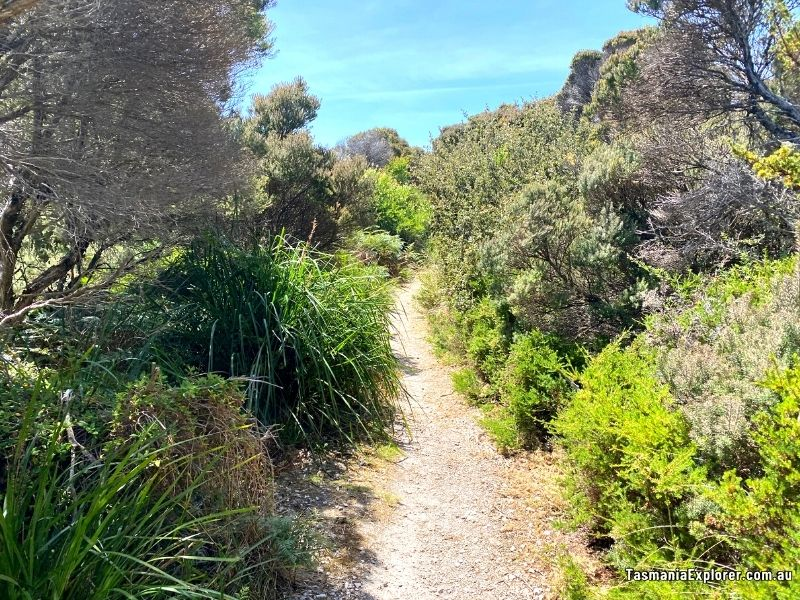 Boat Harbour Beach track