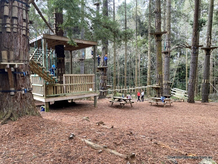 Hollybank Wilderness Adventures yellow rope courses