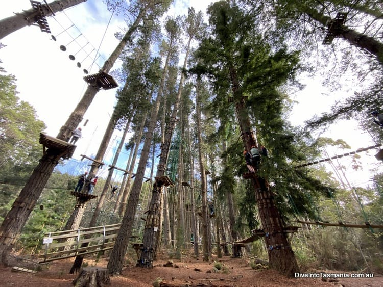 Hollybank Wilderness Adventures tree ropes